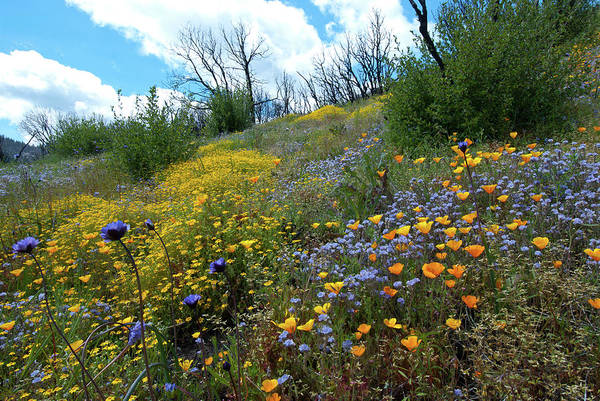 Photograph - Sequoia National Forest Wildflowers by Cascade Colors