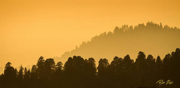 Photograph - Sequoia Sunset by Rikk Flohr