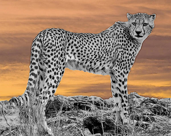 East Africa Digital Art - Serengeti Cheetah by Larry Linton