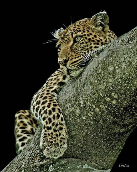 Digital Art - Serengeti Leopard 2a by Larry Linton