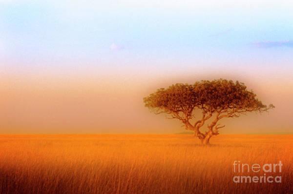 Photograph - Serengeti by Scott Kemper