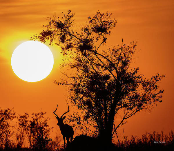 Photograph - Serengeti Sunrise by Tim Bryan