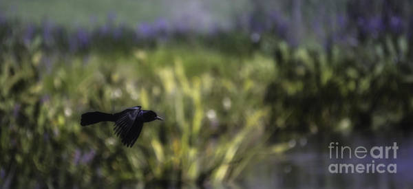 Photograph - Serenity In The Marshes by Mary Lou Chmura