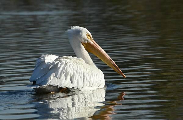 Photograph - Serenity On The Lake 2 by Fraida Gutovich