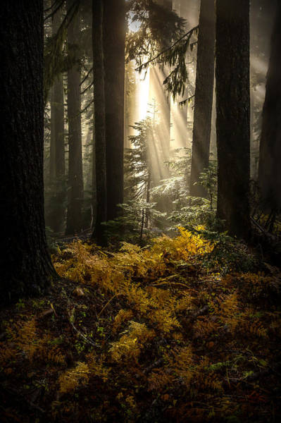 Photograph - Serenity by Ryan Smith