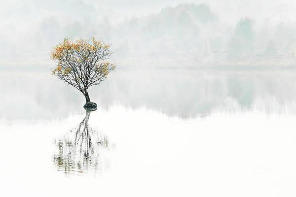 Lone Tree Wall Art - Photograph - Serenity Song by Evelina Kremsdorf