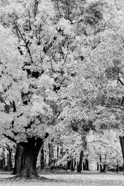 Photograph - Serenity  by Stewart Helberg
