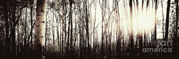 Photograph - Series Silent Woods 3 by RicharD Murphy