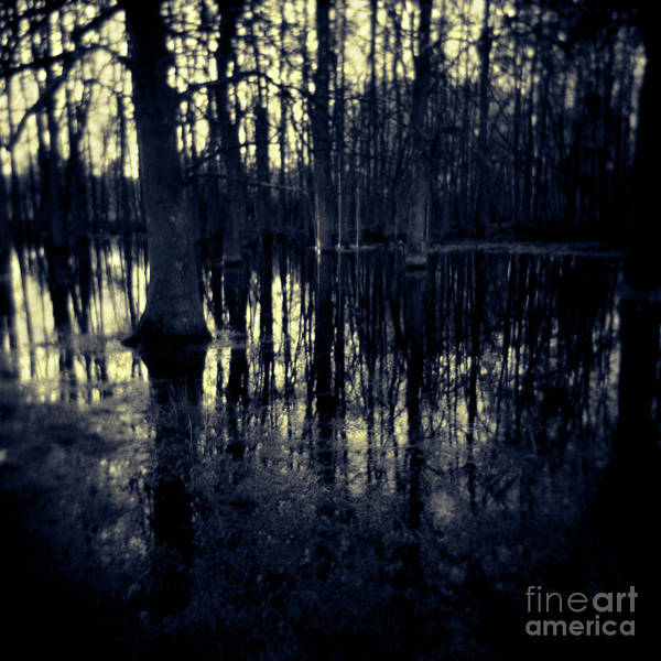 Photograph - Series Wood And Water 4 by RicharD Murphy