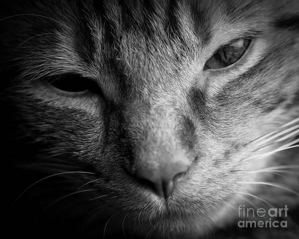 Photograph - Serious Cat by Patrick M Lynch