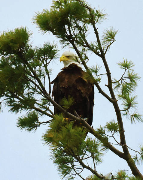 Photograph - Serious Sentry by Sally Sperry