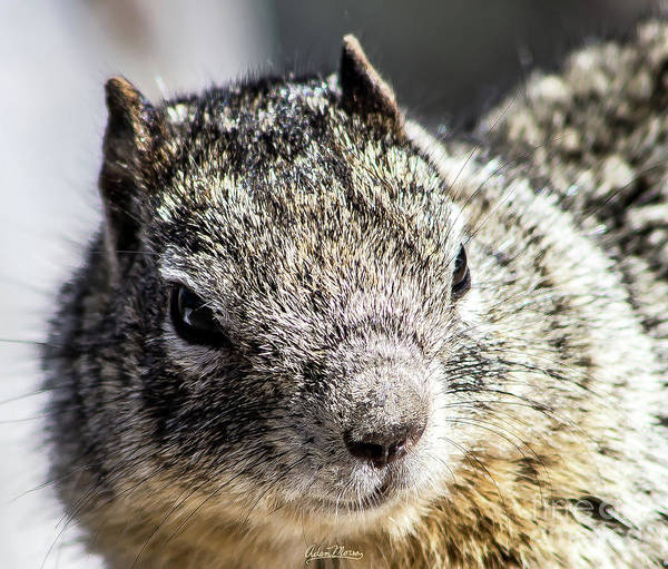 Serious Squirrel Art Print