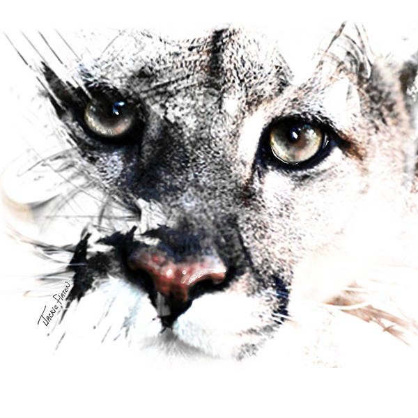 Painting - Seriously Cougar by Jackie Flaten