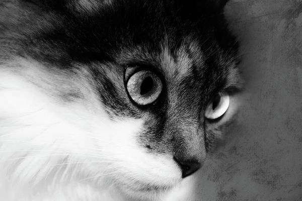 Photograph - Seriously You Have Issues Black And White Cat Art by Isabella Howard