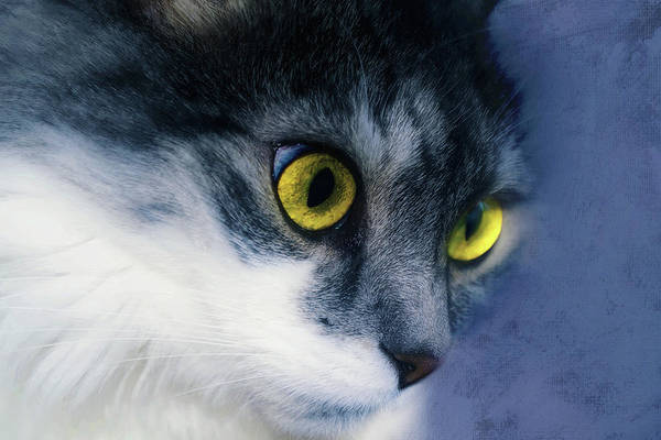 Photograph - Seriously You Have Issues Cat Art by Isabella Howard