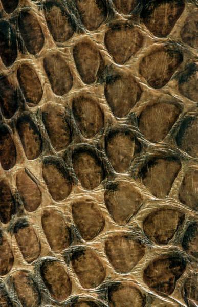 Photograph - Serpent Skin  by Jaroslaw Blaminsky