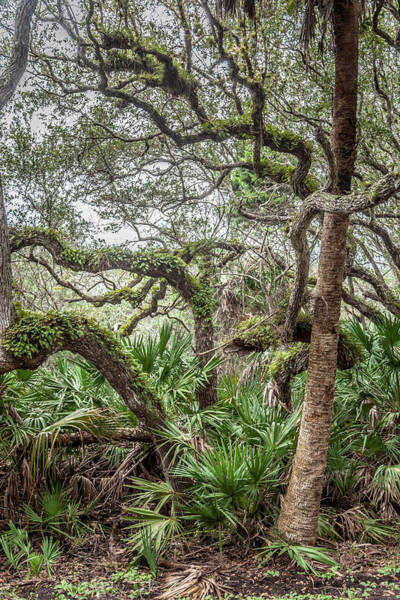 Cape Florida Photograph - Serpentine Trees by W Chris Fooshee