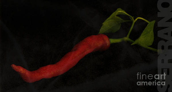 Photograph - Serrano Pepper With A Black Background by Art Whitton