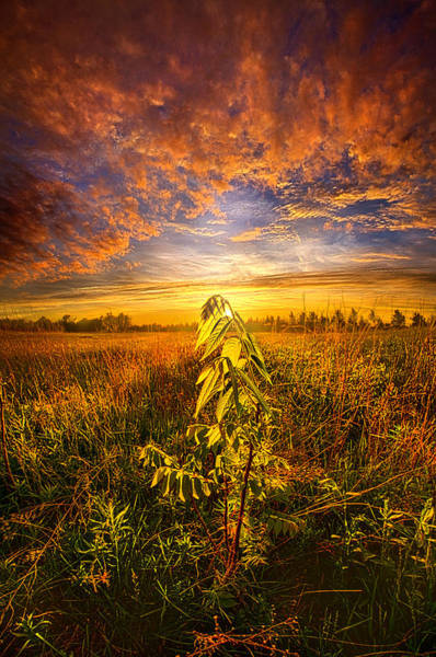 Photograph - Set Free by Phil Koch