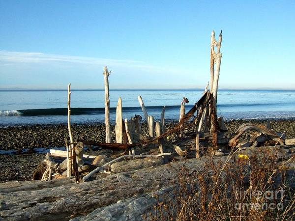 Photograph - Seth's Seaside Driftwood Sculpture  by Delores Malcomson