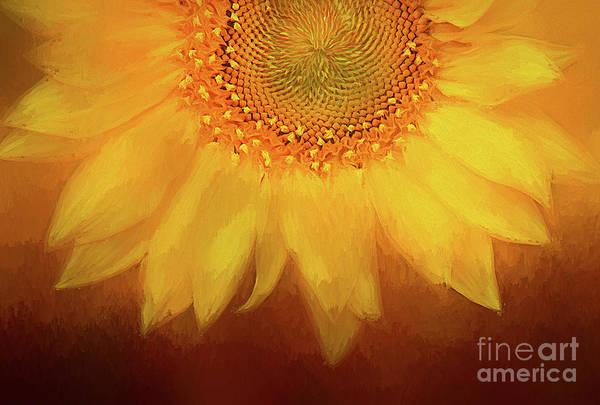 Sunflower Seeds Photograph - Setting Sun by Darren Fisher