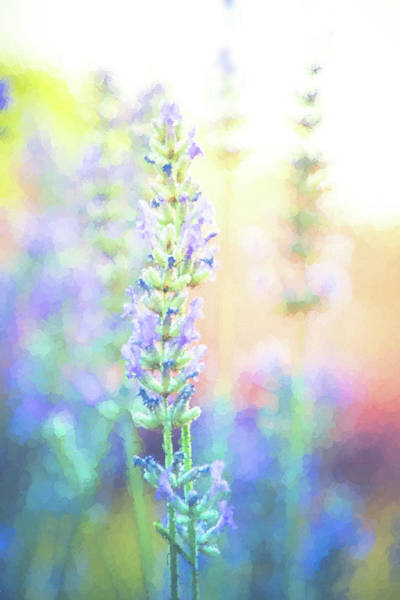 Wall Art - Digital Art - Seurat Lavender by Terry Davis