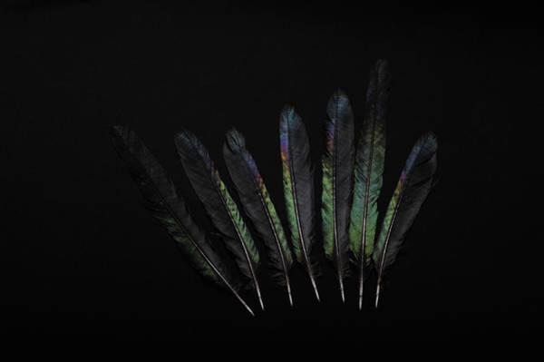 Photograph - Seven Black Feathers by Randi Grace Nilsberg