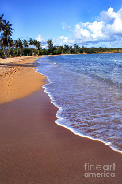 Photograph - Seven Seas Beach by Thomas R Fletcher
