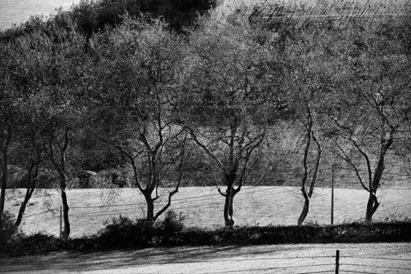Photograph - Seven Trees by Joseph Amaral