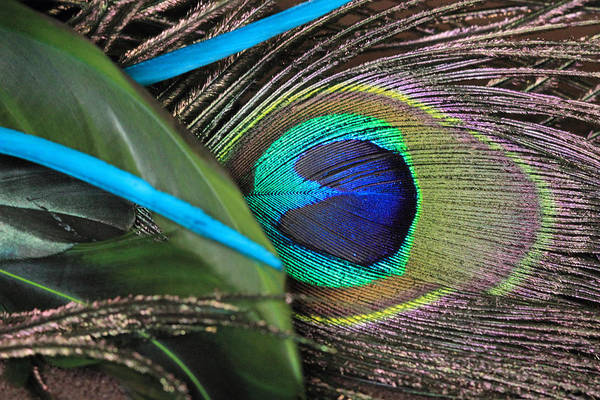 Photograph - Several Feathers by Angela Murdock