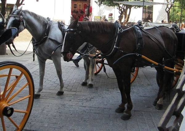 Photograph - Seville Horses Spain by John Shiron