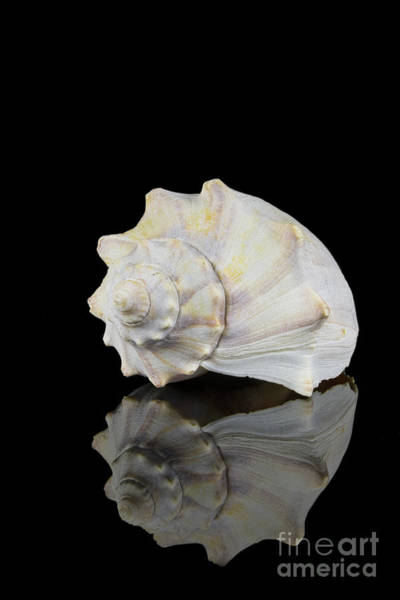 Photograph - Sexy Seashell by Anthony Sacco