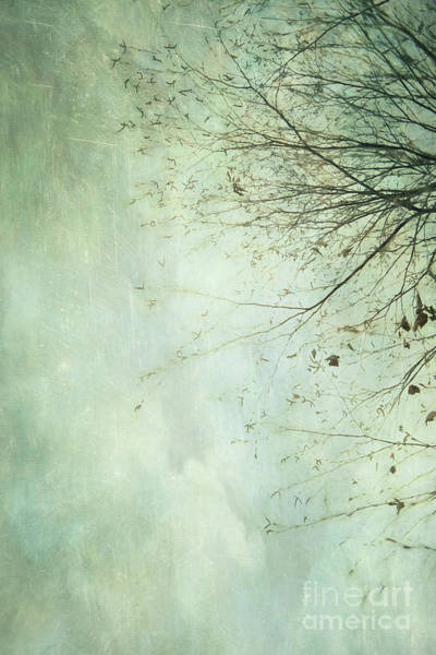 Wall Art - Photograph - Limbs Of A Tree 2 by Priska Wettstein