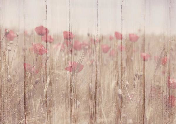 Painting - Shabby Chic Faded Poppies On Wood  by Shabby Chic and Vintage Art