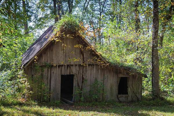 Photograph - Shack In The Woods by John Benedict