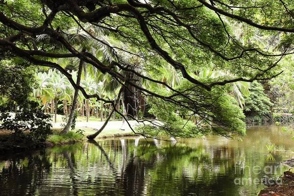 Allerton Garden Photograph - Shade by Leah Toletti