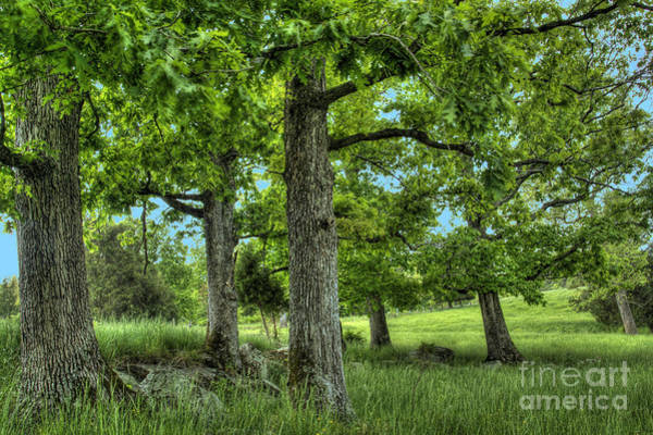 Photograph - Shade Trees by Pete Hellmann