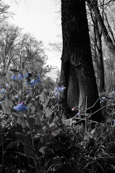 Photograph - Shaded Blues by Dylan Punke