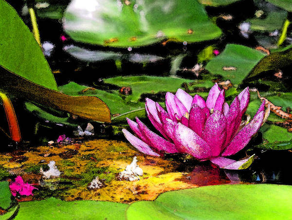 Photograph - Shaded Lotus Wearing Water Color by James Granberry