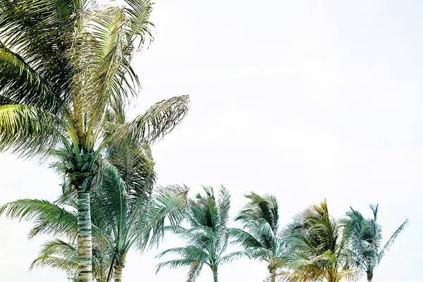 Wall Art - Photograph - Shades Of Cool - Palm Trees by Colleen Kammerer