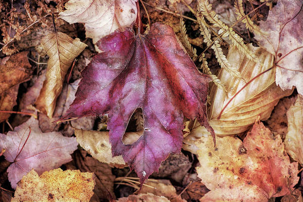 Fallen Leaves Photograph - Shades Of Fall by Susan Capuano