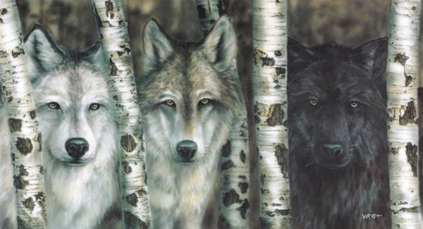 Arctic Wolf Painting - Shades Of Gray by Wayne Pruse