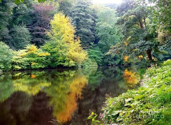 Photograph - Shades Of Green by Morag Bates