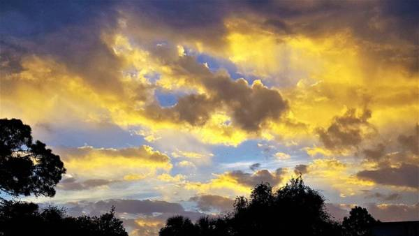 Morning Wall Art - Photograph - Shades Of Yellow by Ric Schafer