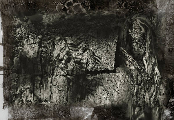Platinum Photograph - Shadow Box by Susan Capuano