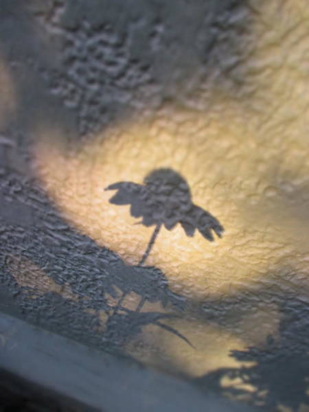 Photograph - Shadow Hand Picked by Marie Neder