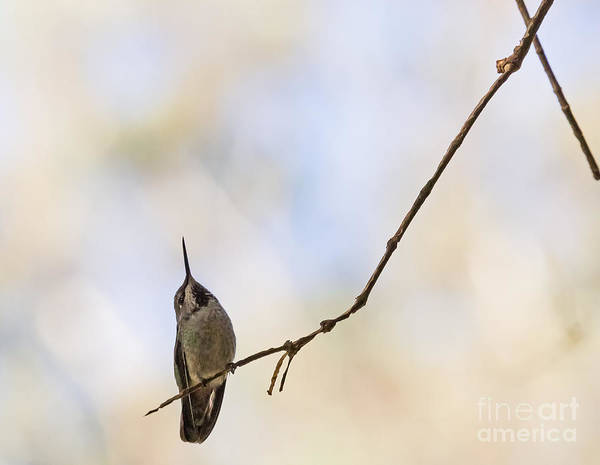 Photograph - Shadow Hummer by Kate Brown