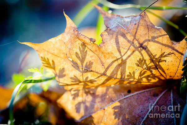 Photograph - Shadow Of Autumn Artmif by Raimond Klavins