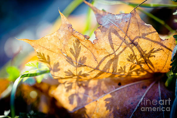 Photograph - Shadow Of Autumn  Artmif.lv by Raimond Klavins