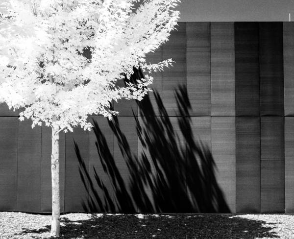 Photograph - Shadow Of The Tree On A Wall by Scott Lacey